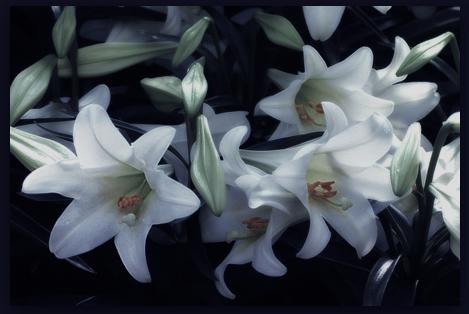 Oriza L. Legrand Relique d'Amour – viss, kas palicis no mīlestības