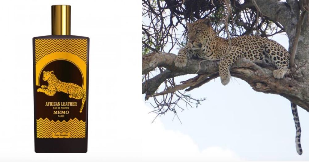 Kā pieradināt leopardu? Memo aromāts African Leather